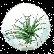 terrarium with tillandsia