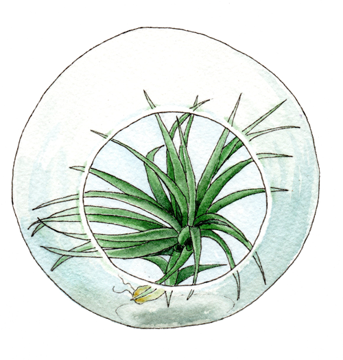 terrarium with tillandsia