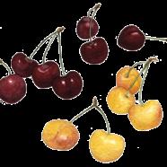 Cherries: Bing + Ranier
