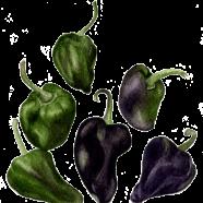 Mulato Isleno pepper