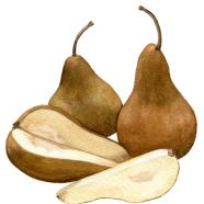 Bosc pear