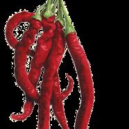 Joe's Long Cayenne pepper
