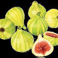 Candy-stripe figs