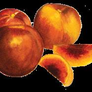 Red Summer nectarine