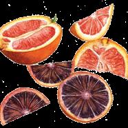 Oranges: Cara Cara + Blood